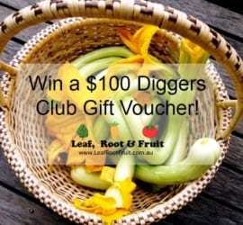 Win a $100 Diggers Club Voucher with our free Zucchini Tromboncino Seeds