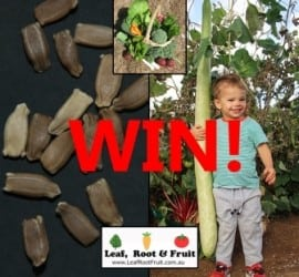 Grow the biggest New Guinea Bean in our Competition