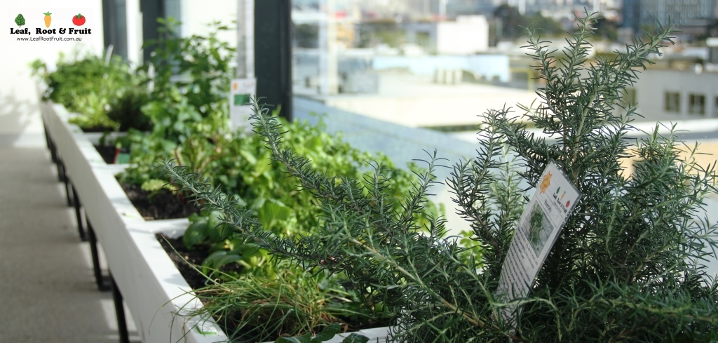 Gardening Group: REA Group And Their Office-based Edible Garden