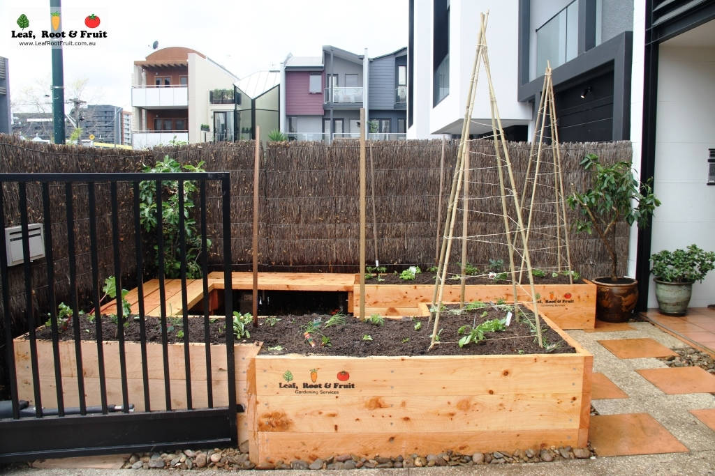 Courtyard edible garden make over south yarra