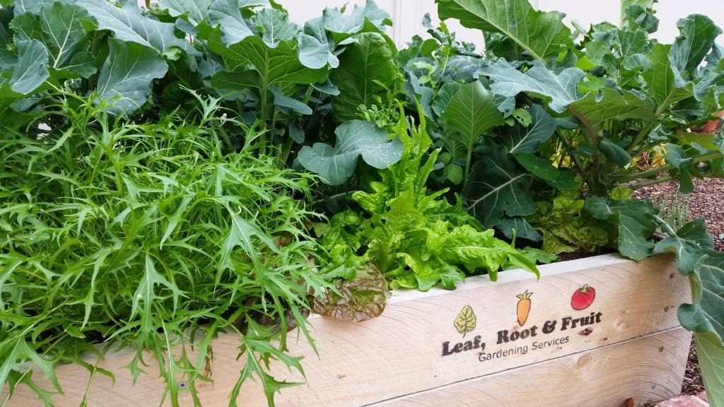 Rasied Edible Garden Melbourne