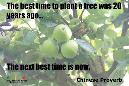 Best Time To Plant A Tree Gardening Quote Leaf Root Fruit