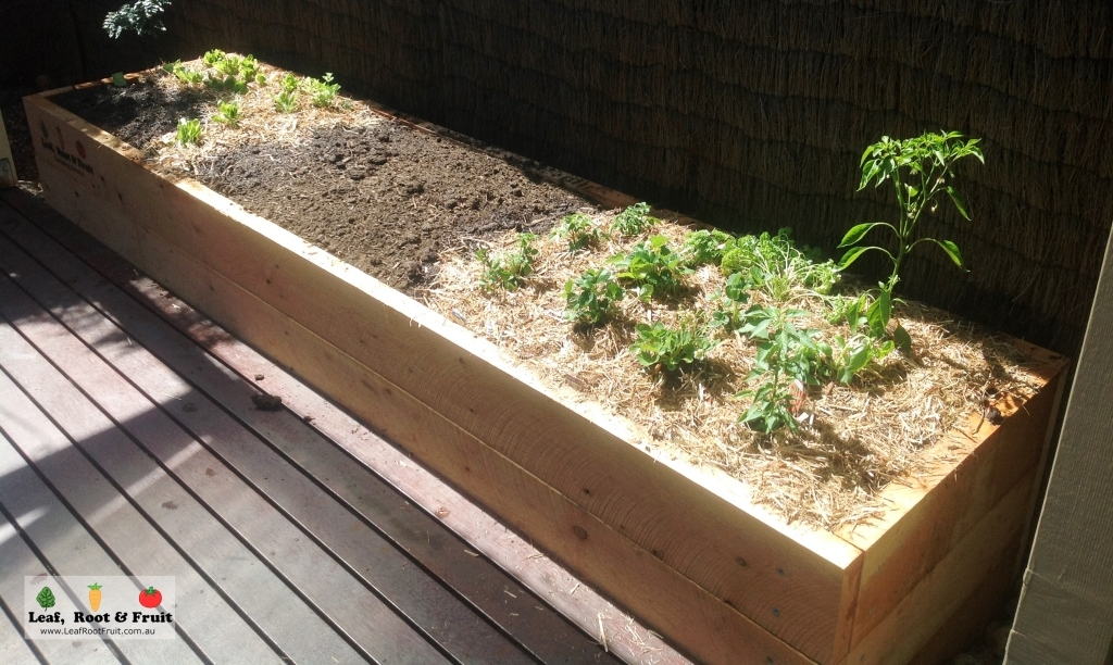 A raised cypress garden bed, ready for planting herbs or vegetables