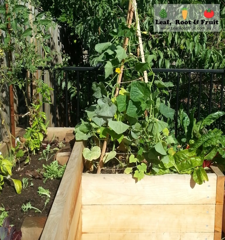 Vegetables in a cypress sleeper raised vegetable garden