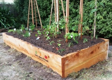 Planted Raised Cypress Garden Bed Leaf Root Fruit Gardening Services