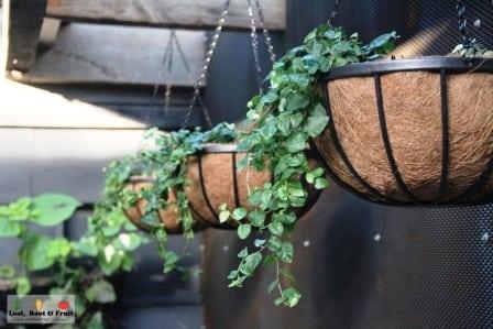 Hanging baskets estelle bistro