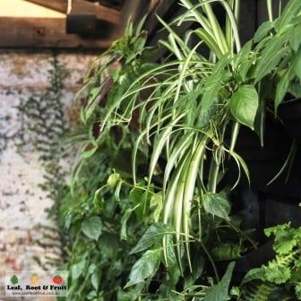 Stunning Vertical Garden Estelle Bistro Northcote
