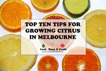 Top Ten Tips For Growing Citrus In Melbourne