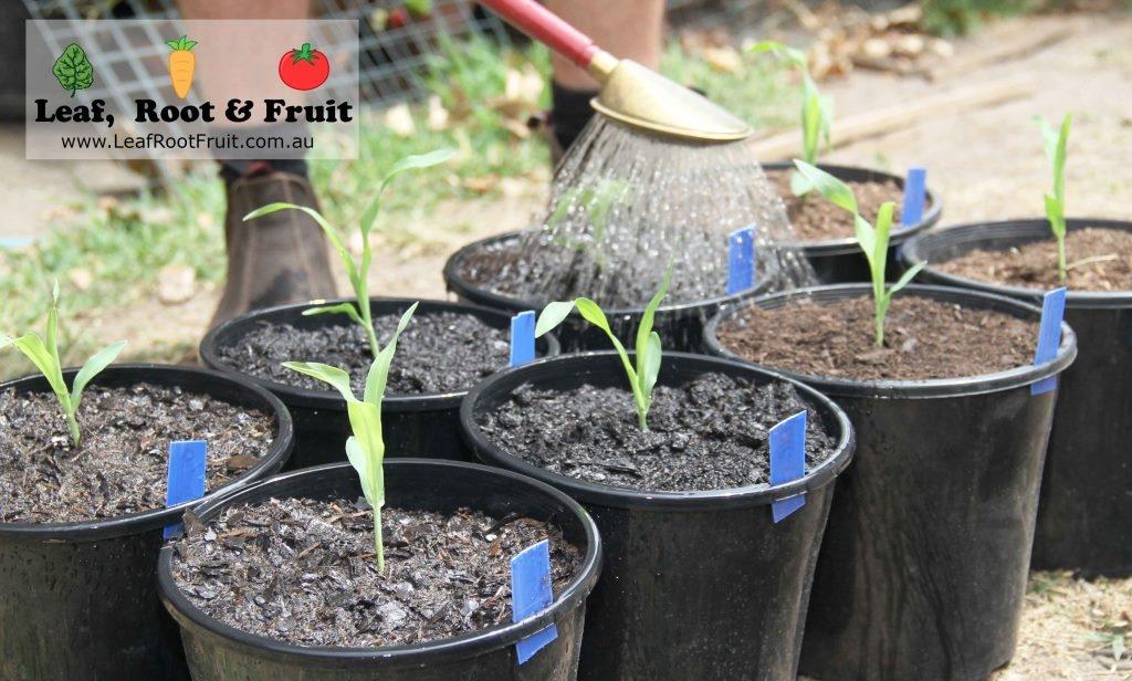 Soil comparison experiment Melbourne