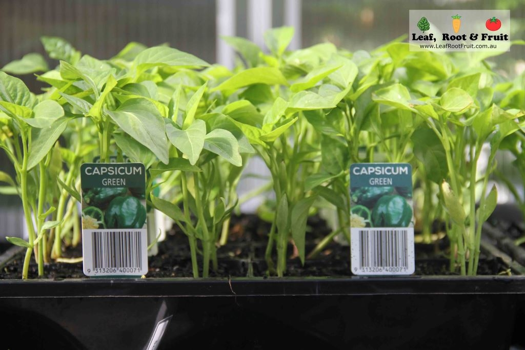 Which Potting Mix is Best? - Leaf, Root & Fruit Gardening Services