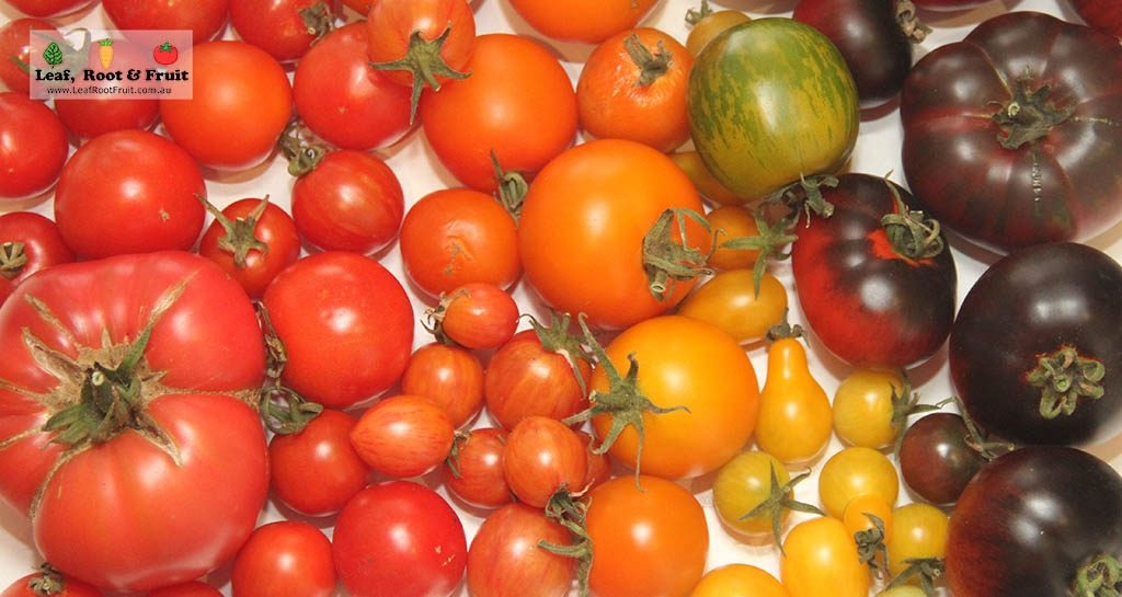 How to Grow Great Tomatoes in Melbourne - Leaf, Root & Fruit ...