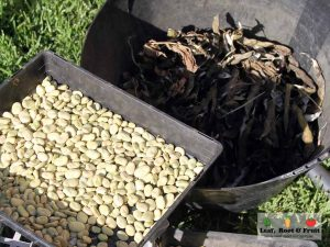Science of Edible Gardening Seed Saving